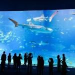 aquarium-1042371_640