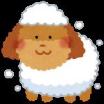 dog_shampoo