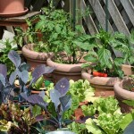 kitchen-garden-255404_640